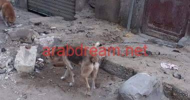 الشرطة تتخلص من كلب مسعور تسبب في عقر ٢٦ شخصاً بغرب الأقصر .