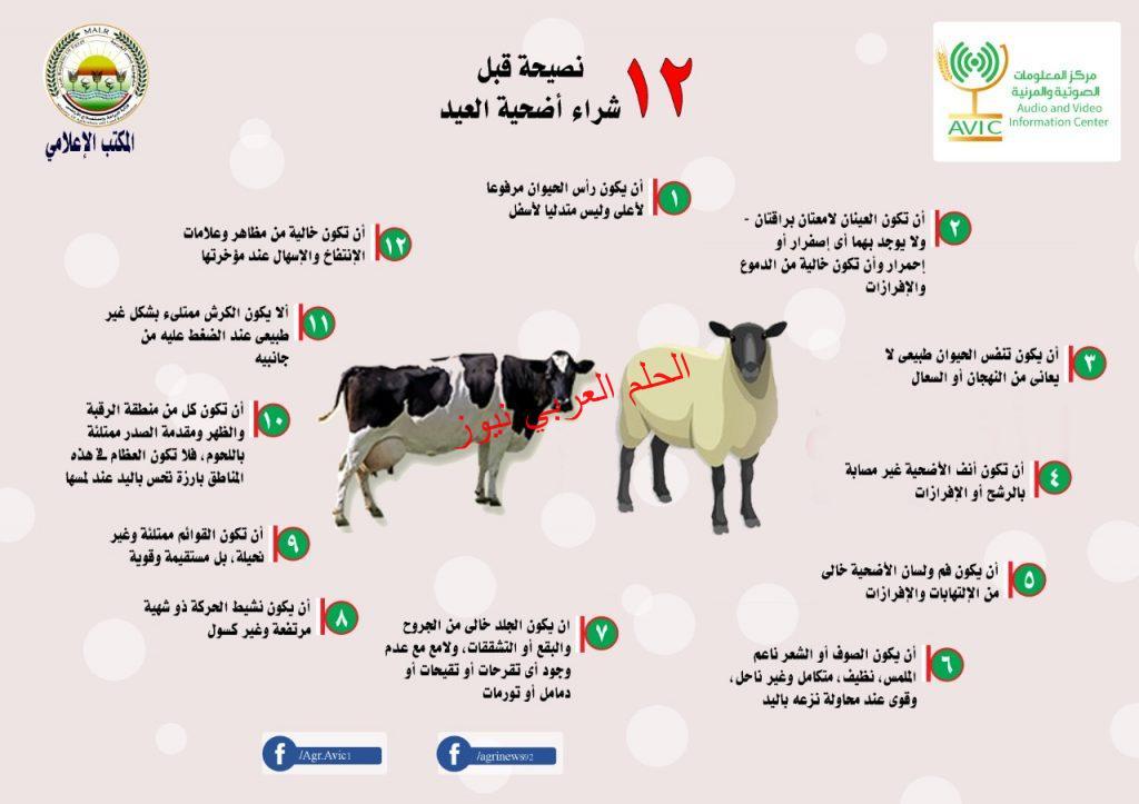 الزراعة تطلق روشتها  قبل شراء أضحية العيد.. ١٢ نصيحة يجب مراعاتها في اضحيتك بقلم ليلي حسين