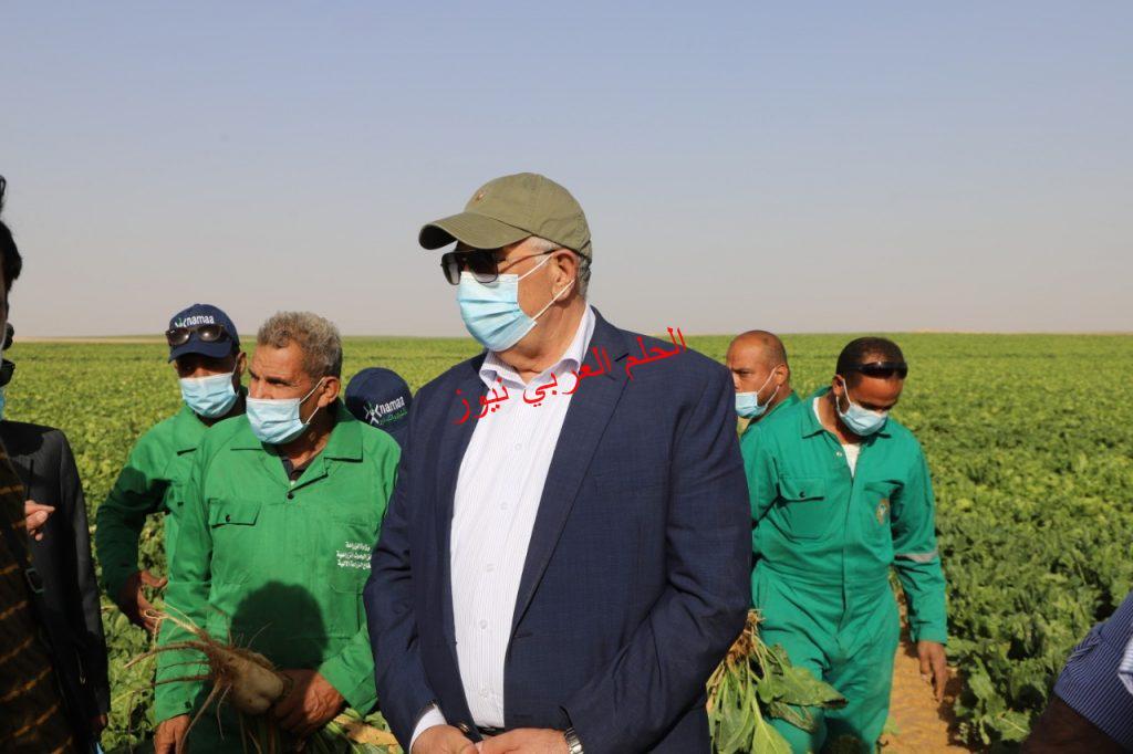 الزراعة حصاد 3500 فدان من محصول البنجر من إجمالي 4000 فدان بقلم ليلي حسين
